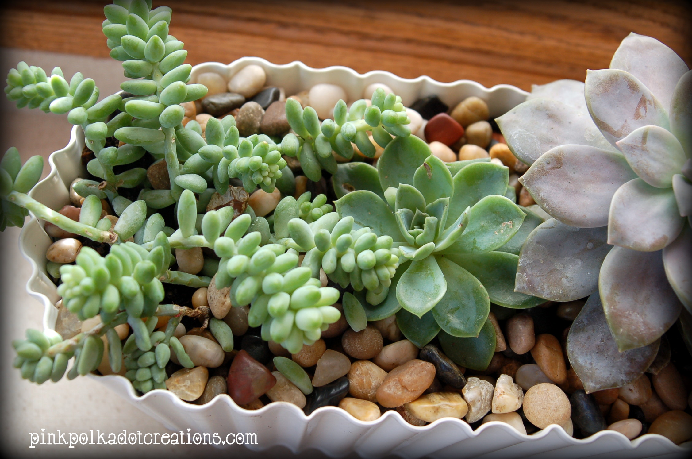 Do You Have Any Succulents At Your House What Are Favorite Ones