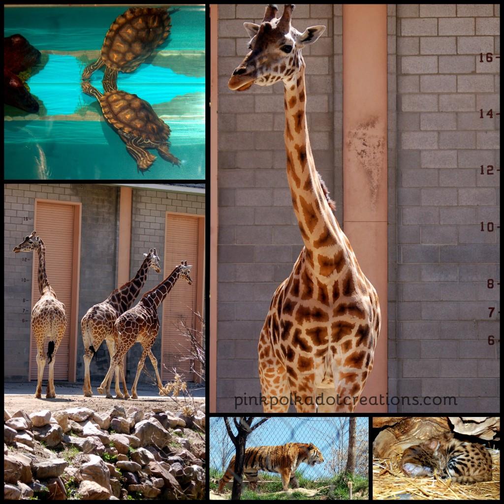 Hogle Zoo-001