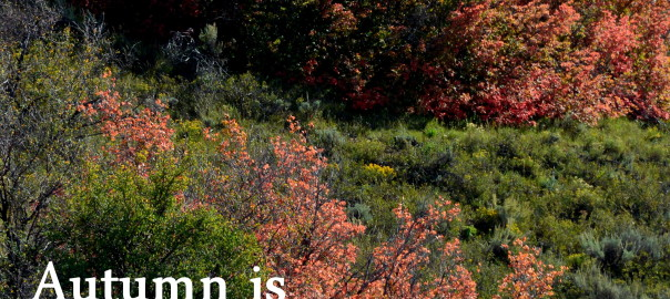 Autumn is like