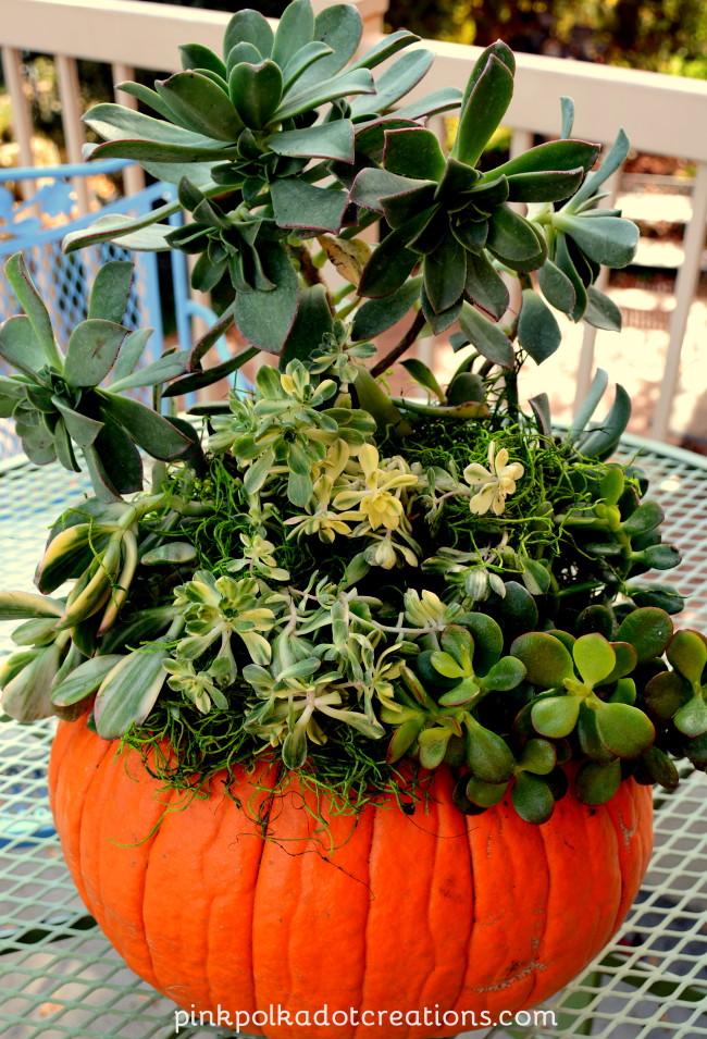 Perfect Pumpkin Planter